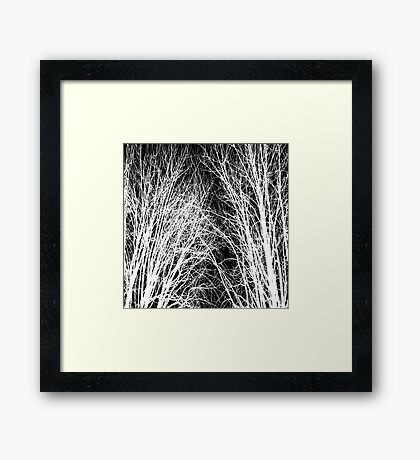 Comely trees 1 Framed Print