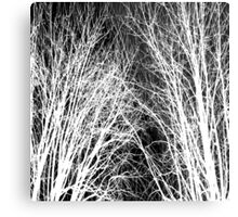 Comely trees 1 Metal Print