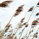 Colors of the Wind by Jasper Smits