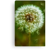 Just a Little Weed Dandelion Print  Canvas Print