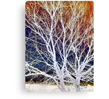 Wintry Mix - Colorful Sky & Shocking White Branches Canvas Print