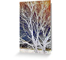 Wintry Mix - Colorful Sky & Shocking White Branches Greeting Card