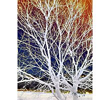 Wintry Mix - Colorful Sky & Shocking White Branches Photographic Print
