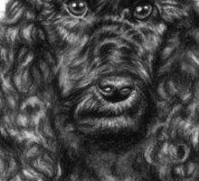 Poodle Portrait Sticker