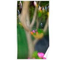 small coloured birds and other pretty parrots Poster