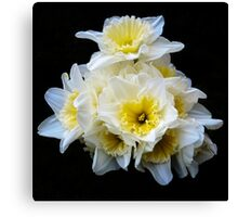 A bunch of daffodils Canvas Print