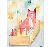 Mom and Kittens in a Box Photographic Print