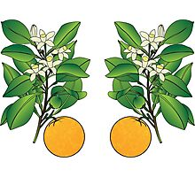 Orange Blossoms Photographic Print
