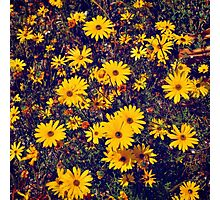 Yellow flower patch Photographic Print