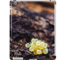 spring eggs iPad Case/Skin