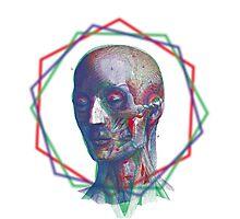 Anatomy RGB Photographic Print