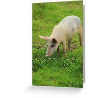 Pig in Wildflowers Greeting Card