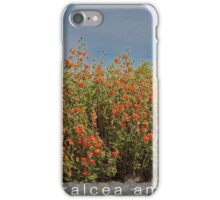 sphaeralcea ambigua - desert globemallow - orange iPhone Case/Skin