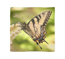 Swallowtail Butterfly Scarf