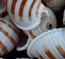 Stripey Shells Sticker