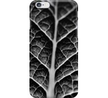 Leaf veins and texture iPhone Case/Skin