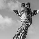 Selfi  by yampy