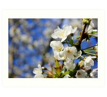 Blossoms in the Sun Art Print