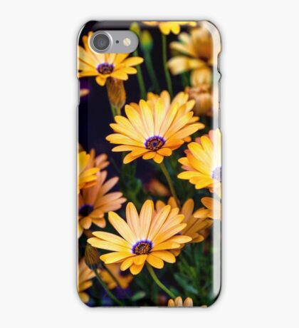 African Daisies iPhone Case/Skin