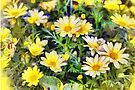 Yellow daisies - painted by PhotosByHealy