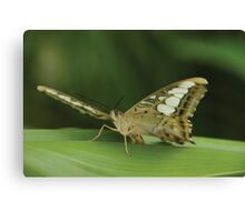 Flying Wings Canvas Print