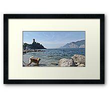 lake whit dog Framed Print