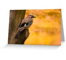 Jay Bird on the tree Greeting Card