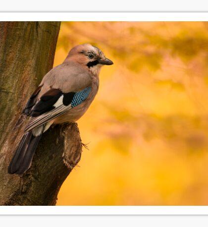 Jay Bird on the tree Sticker