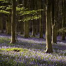 Kingswood Bluebells by Ian Hufton