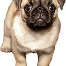 Cute Pug Dog Sticker by ImageMonkey