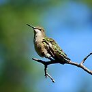Hummingbird on a branch  by LjMaxx