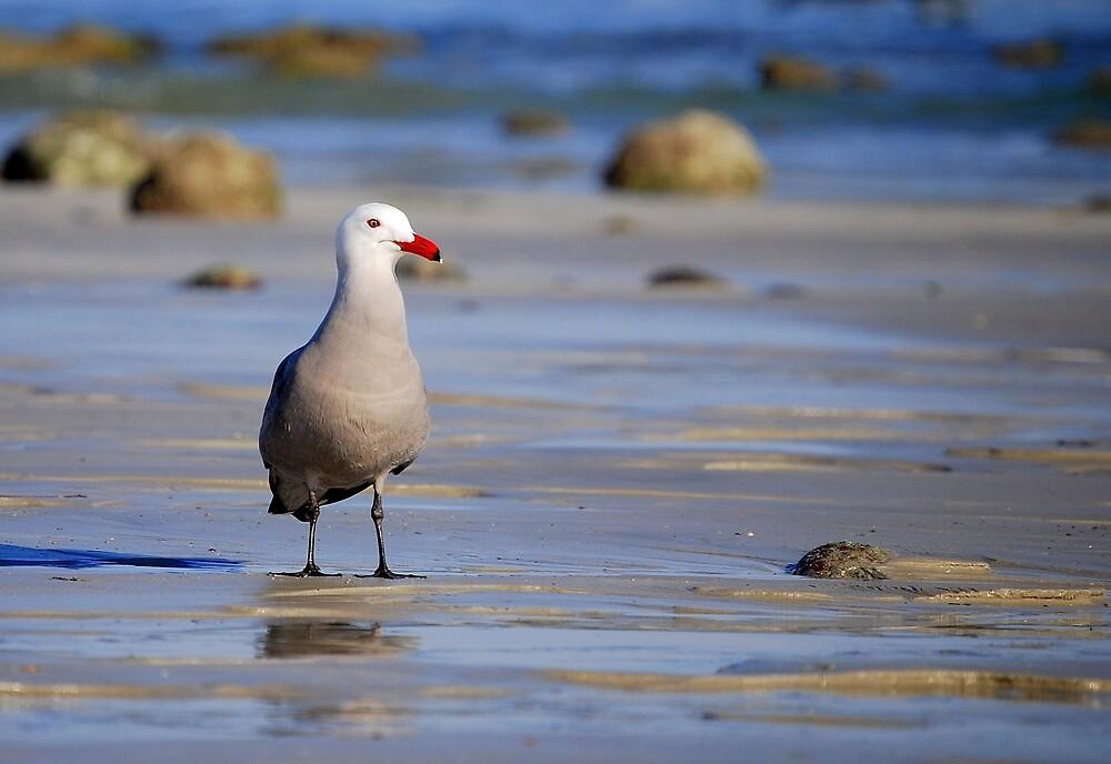 A Bad Company Seagull by LjMaxx
