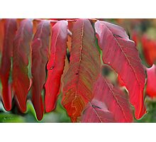 Red Sumac Abstract Photographic Print