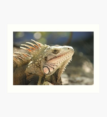 Big Handsome Iguana Art Print