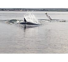 Dolphin and Salmon Photographic Print