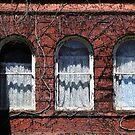 Harrington Inn Windows by marybedy