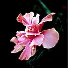 Tropical Pink Flower  by LjMaxx