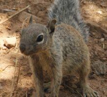 Hillbilly Squirrel Sticker