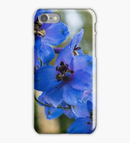 Sapphire Blues and Pale Greens - a Showy Delphinium iPhone Case/Skin