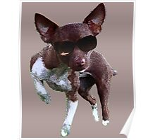 Inquisitive Chihuahua  Poster