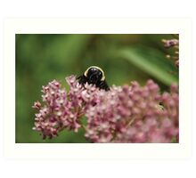 Itty Bitty Bumble Bitty Art Print