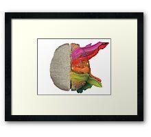The coloured brain Framed Print