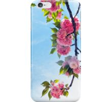 Blooming Blossoms  iPhone Case/Skin