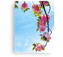Blooming Blossoms  Canvas Print
