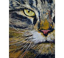 Norwegian Forest Cat Photographic Print