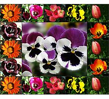 Sunkissed Flowers Collage Photographic Print