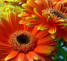 Flowers from my date - Photography by LjMaxx
