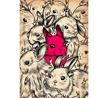 BUNNIES GALORE! Photographic Print