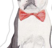Leo the Boston Terrier Sticker