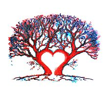 Loveheart Tree Photographic Print
